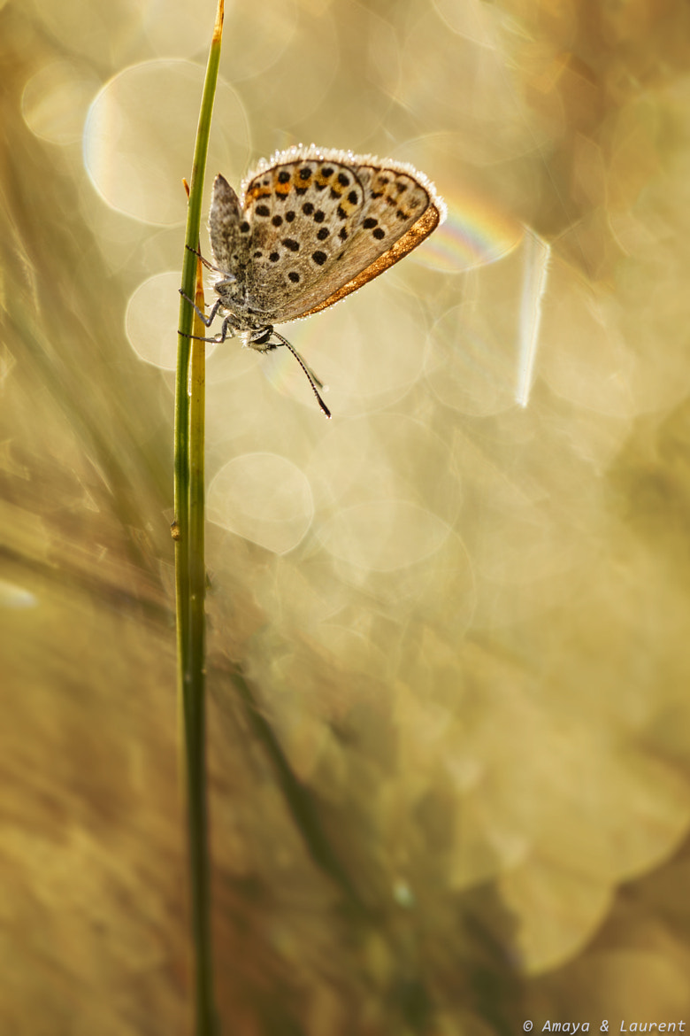 Photograph Dreamin by Amaya Bercetche on 500px