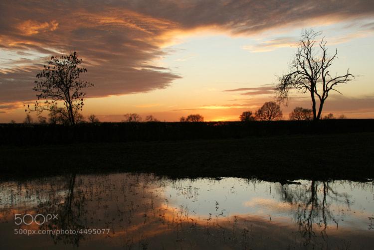 Gayton Wilds,Northamptonshire,UK