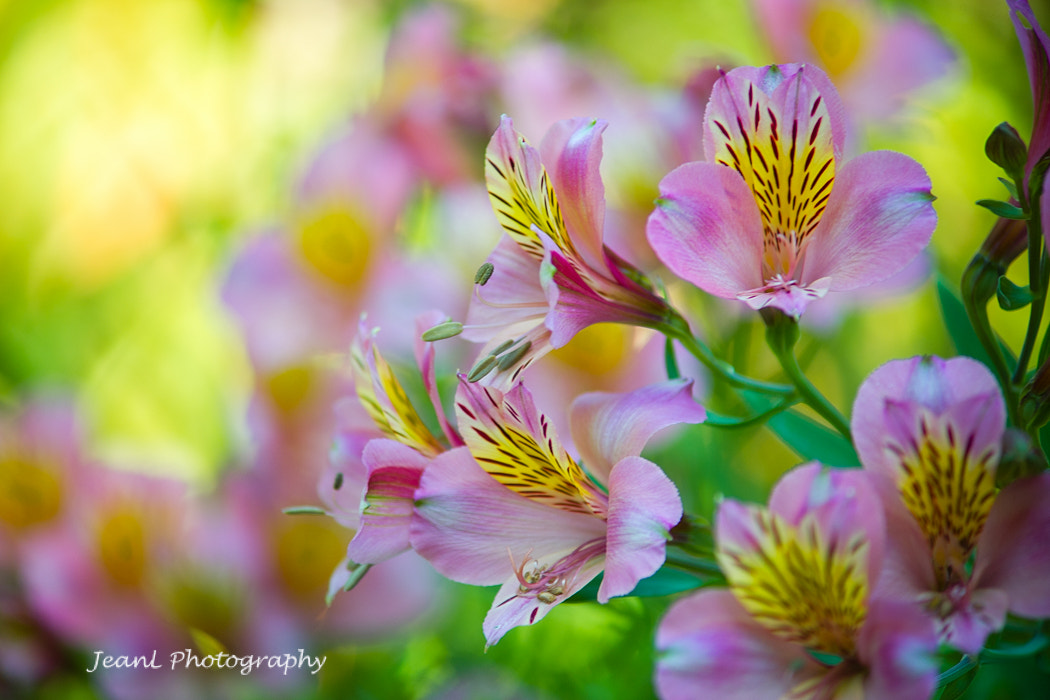 Photograph Flowers in dream by Jean Li on 500px