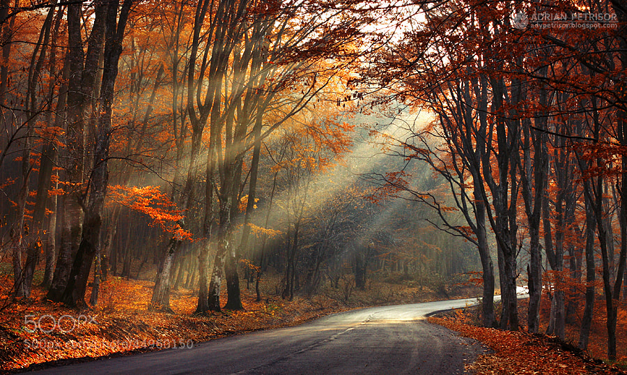 Photograph Golden forest by Adrian Petrisor on 500px