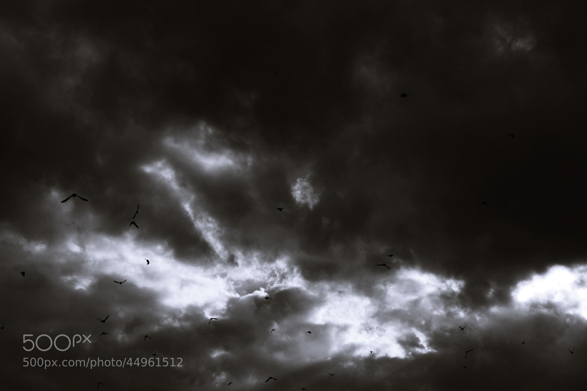 Photograph Untitled by Delegeanu Simona on 500px