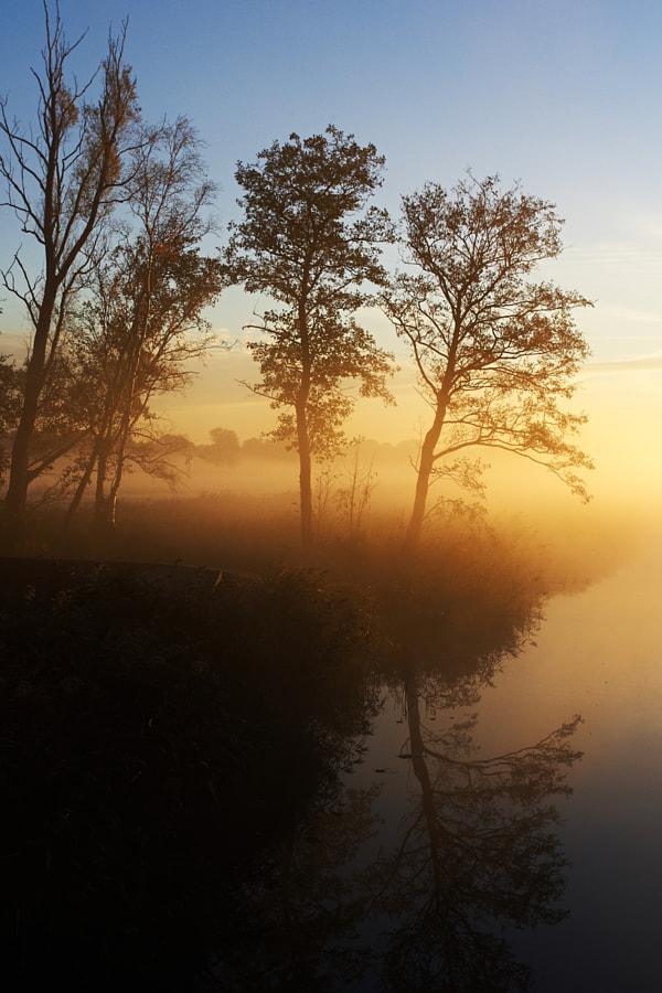 Fog in 'De Wieden'