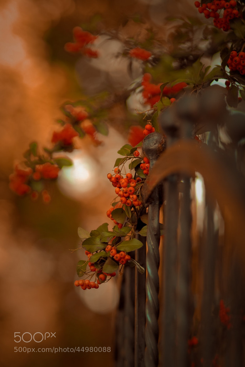 Photograph Ashberry by Stasy Rudik on 500px