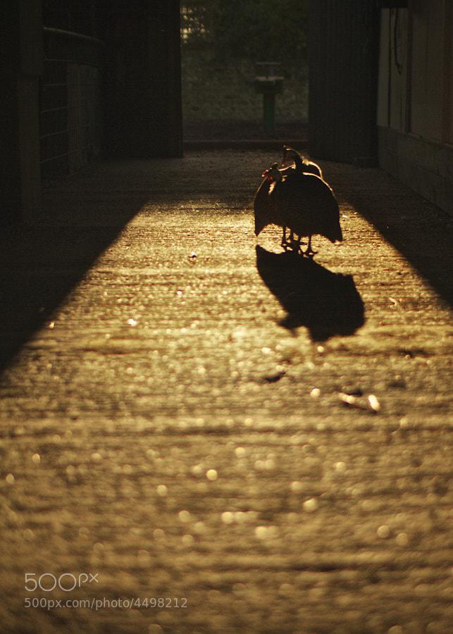 Crunchy Golden Turkey by Mike Griggs (creativebloke)) on 500px.com