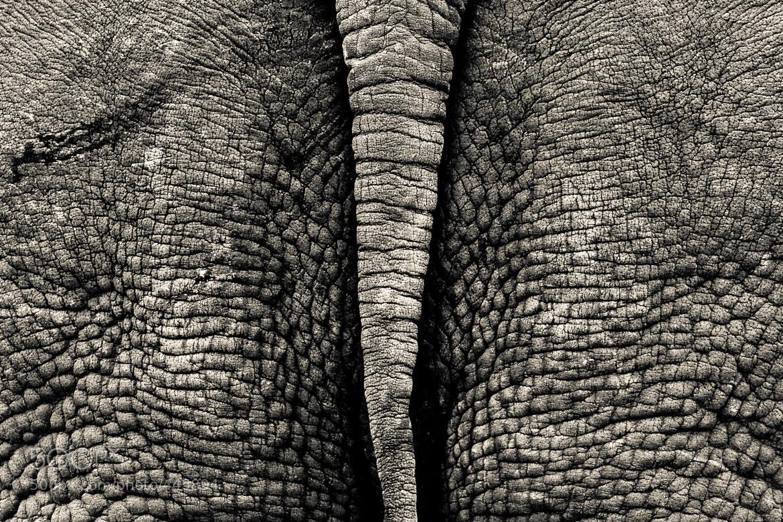 Photograph Backstage of rhino land by Gorazd Golob on 500px