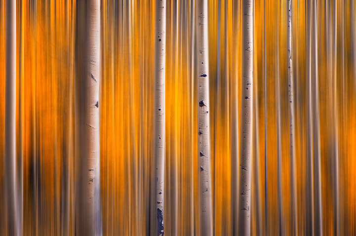 Photograph The Parallel Forest by Michael Anderson on 500px