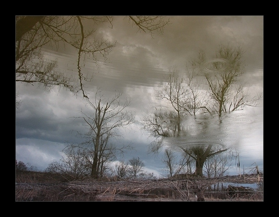 Photograph Crying Tree by Silver SB on 500px