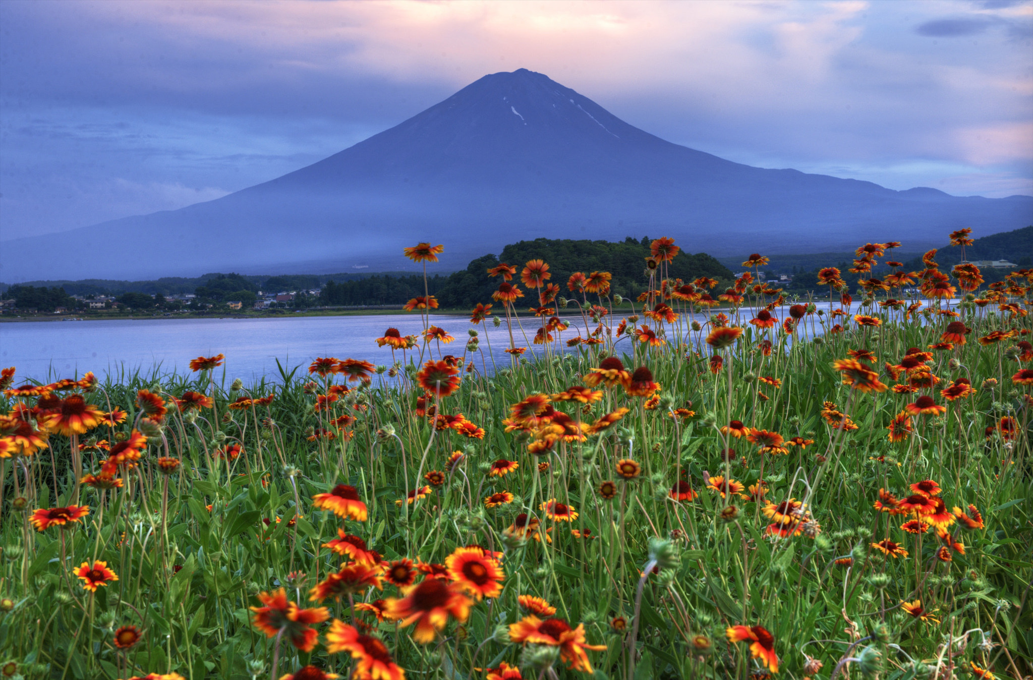 Photograph Mt Fuji Flowers by hugh dornan on 500px