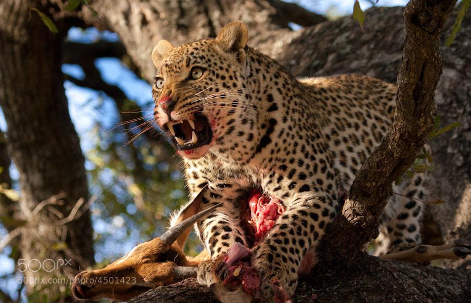 Photograph Spitting Temper by Marlon du Toit on 500px
