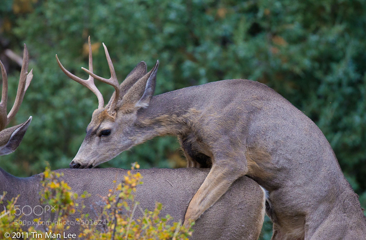 Photograph Two male deers? by Tin Man on 500px