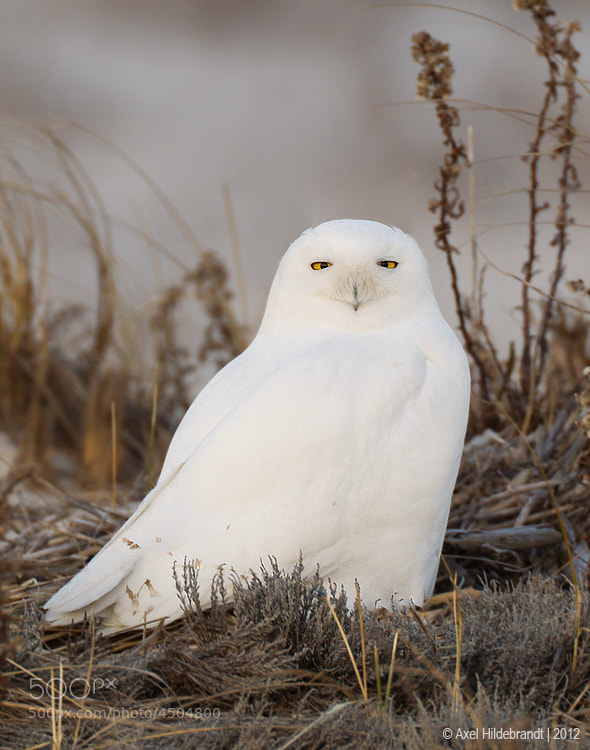 Photograph The Arctic Ghost by Axel Hildebrandt on 500px