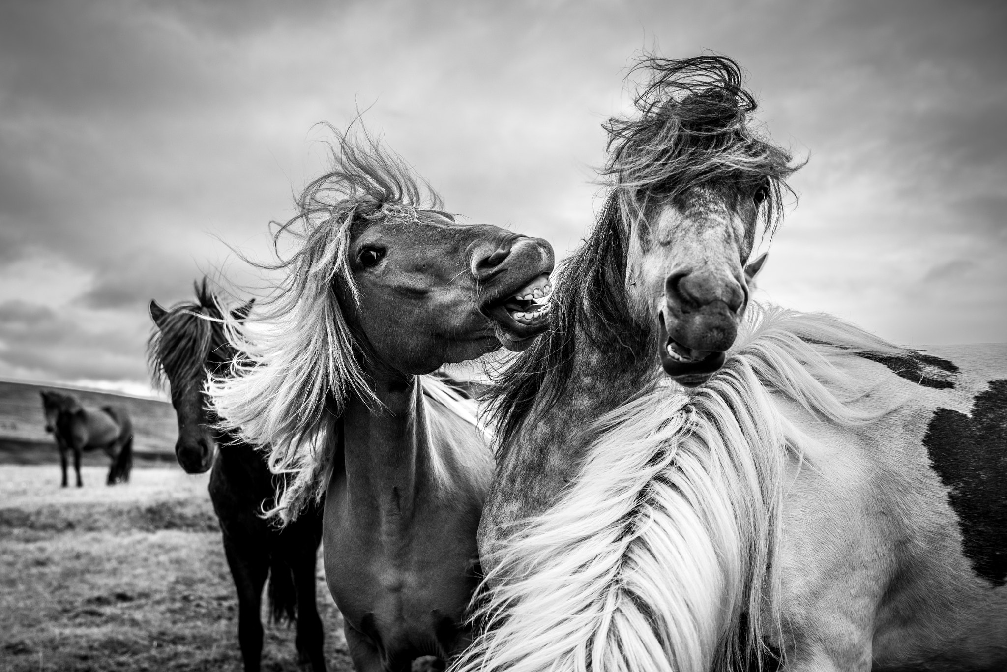 Photograph Angry horse by Ferdinand Bart  Alst on 500px