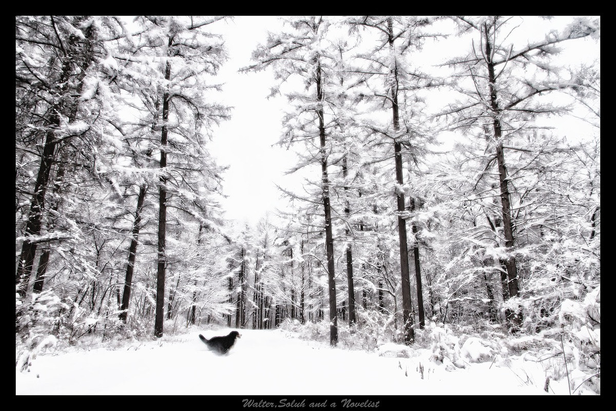 Photograph White morning by Toshi Bando on 500px