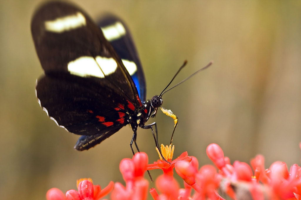 Photograph butterfly by Hudson Alves on 500px