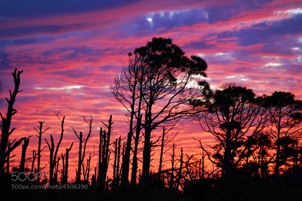 Photograph Sunset/Silhouette by Michael Fitzsimmons on 500px