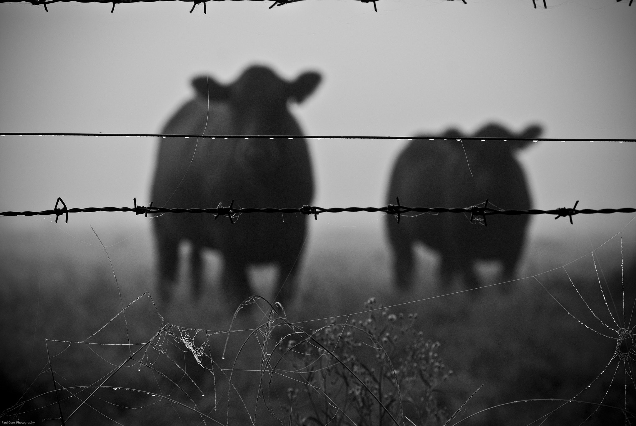 Photograph Brown Cow's Ghetto by Paul Cons on 500px