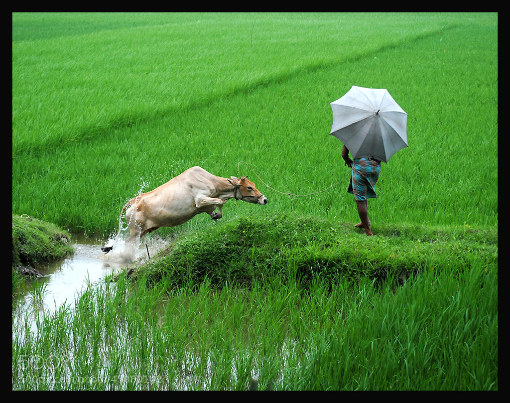 Photograph Rural life by Motiur Rahman on 500px