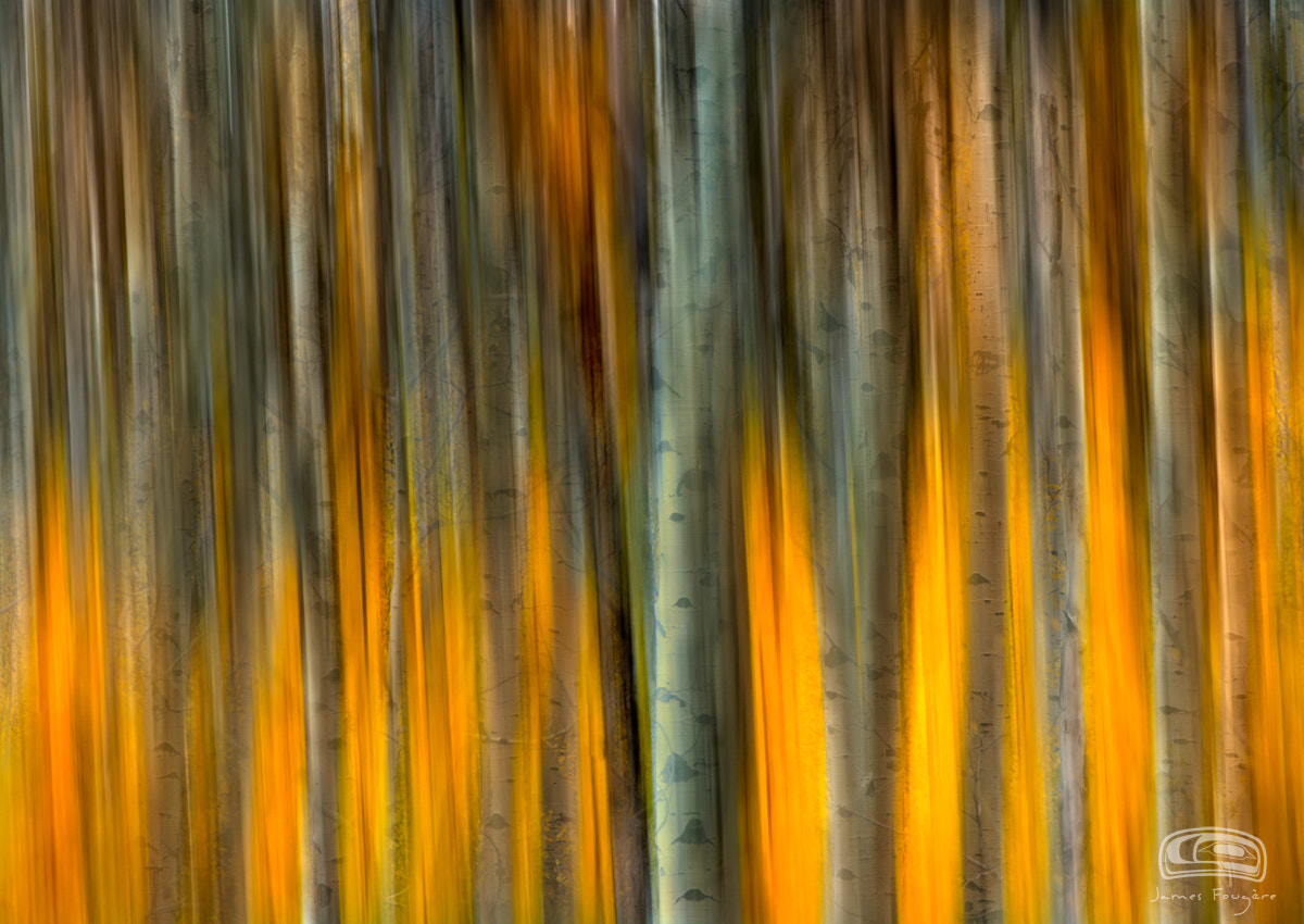 """Photograph """"SPIRIT OF THE TREES"""" by James Fougere on 500px"""
