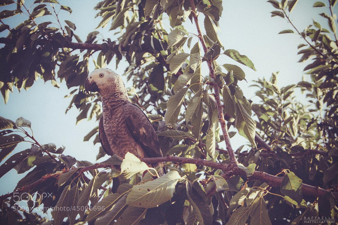 Photograph Charlie the parrot by Raffaella Mattei Cattani on 500px