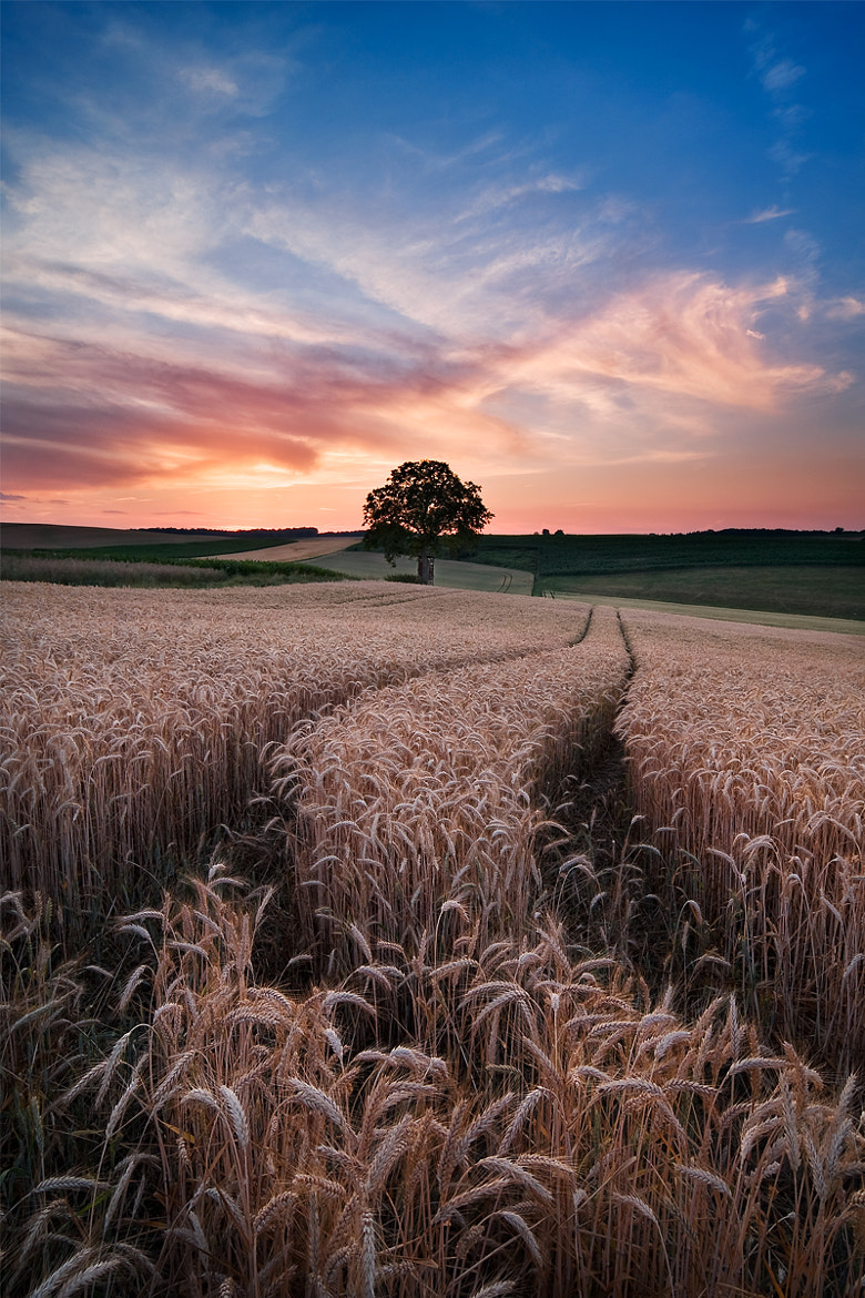Photograph Summer Glow by Michael  Breitung on 500px