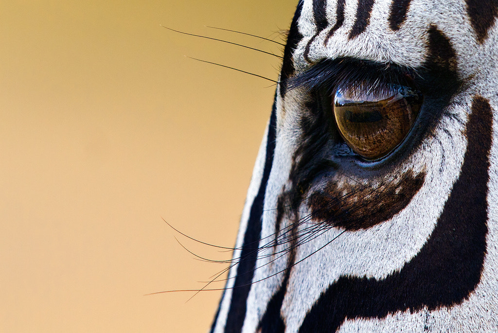 Photograph Striped Lady by Pieter Venter on 500px