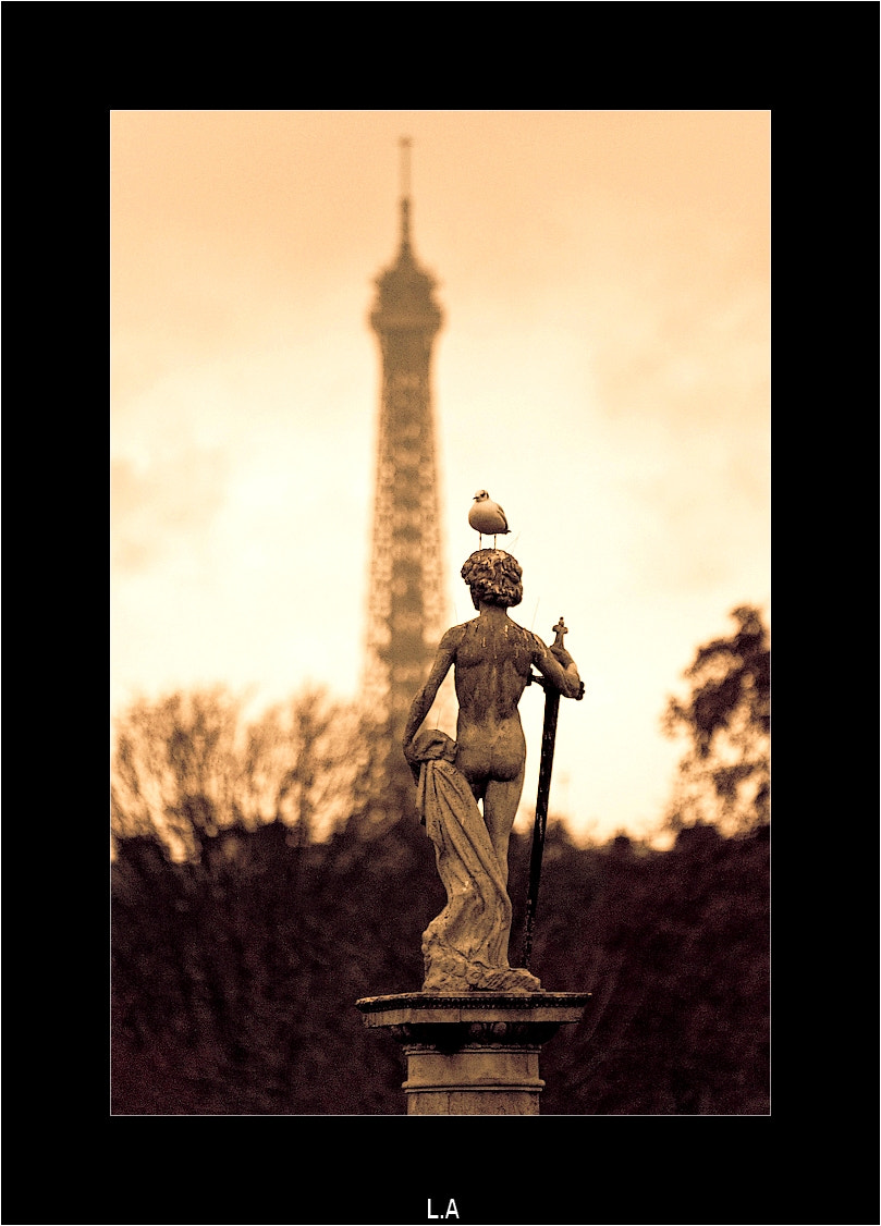 Photograph The statue and the black-headed gull by Loïc Auffray on 500px