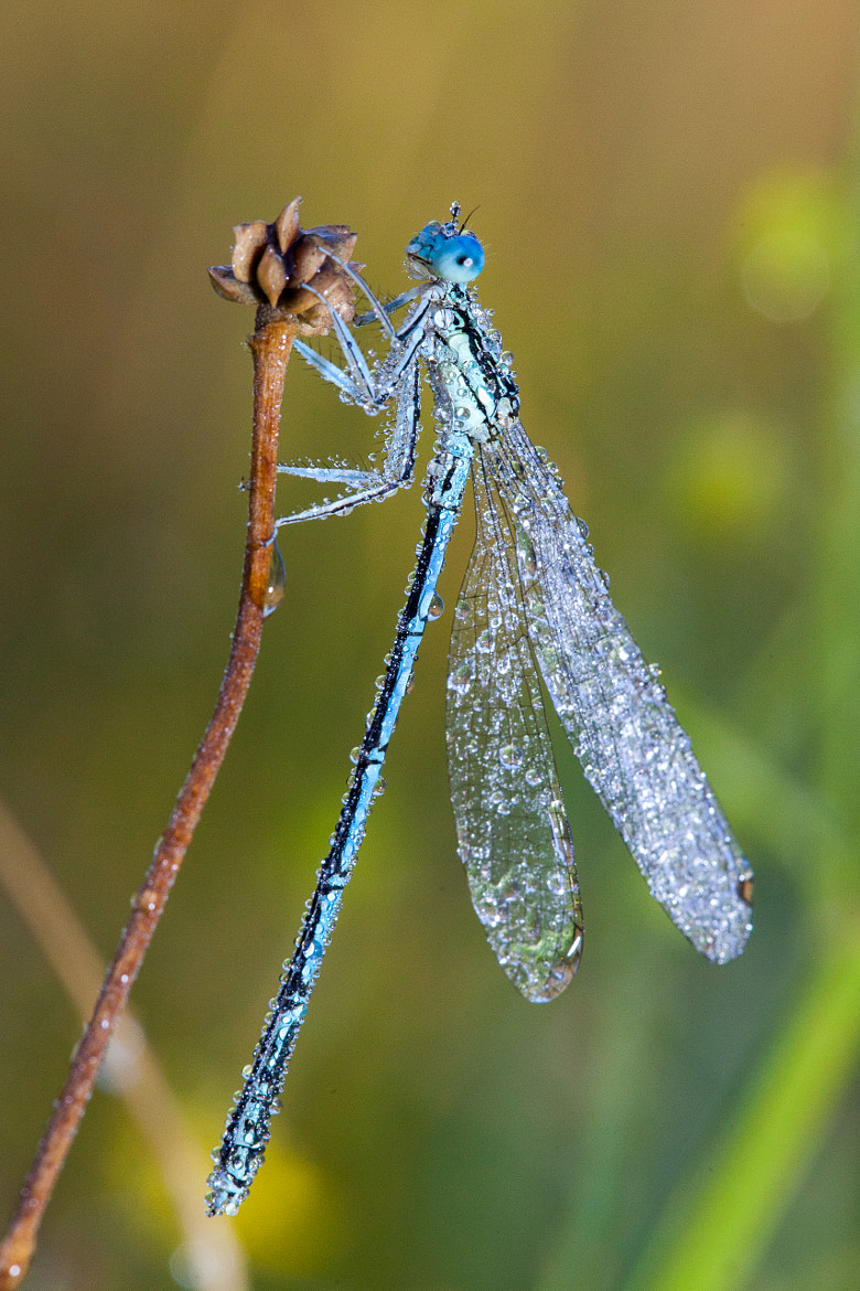 Photograph In The Dew by Denis Belyaev on 500px