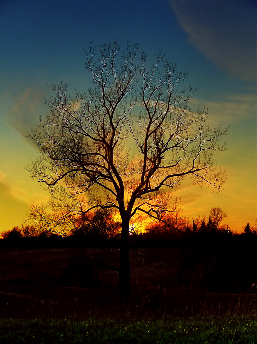 Photograph Silhouette Tree by Bill Tiepelman on 500px