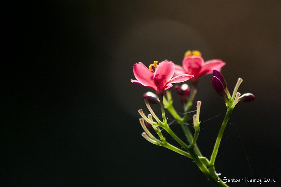 Haloed flowers