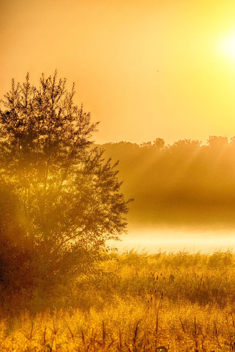 Photograph GoldenLight... by Ionescu Dragos on 500px