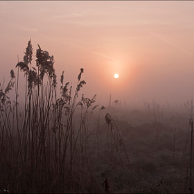 misty morning by Bart Ceuppens (bartceuppens)) on 500px.com
