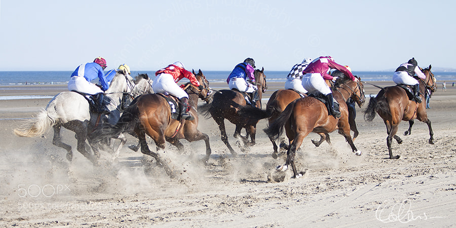 Laytown Races 2013