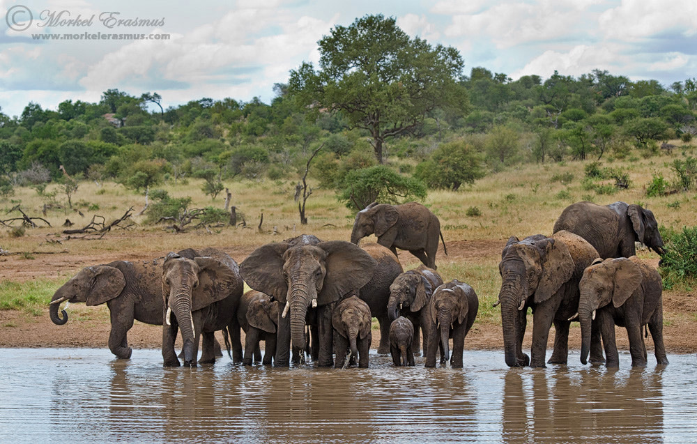 Photograph The Thirsty Herd by Morkel Erasmus on 500px