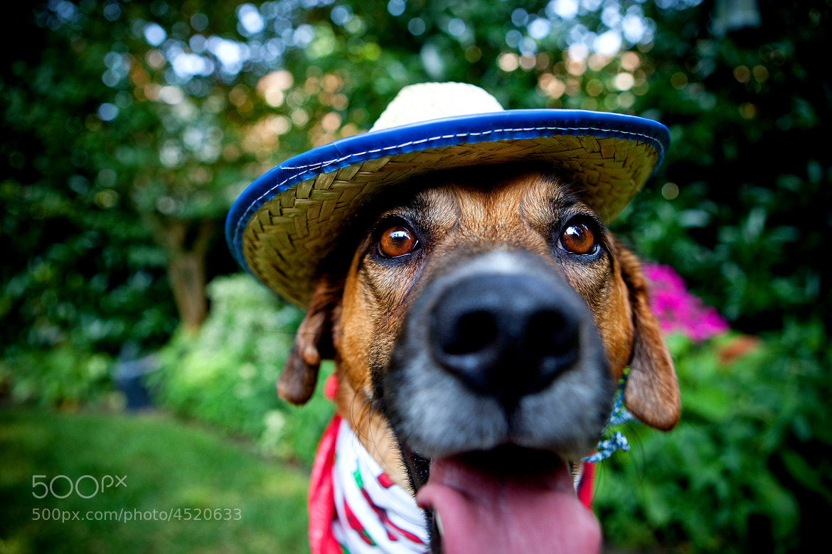 Photograph There's a new sheriff in town... by Jill Beninato on 500px