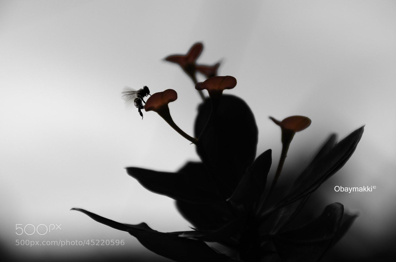 Photograph Untitled by Obay Makki on 500px