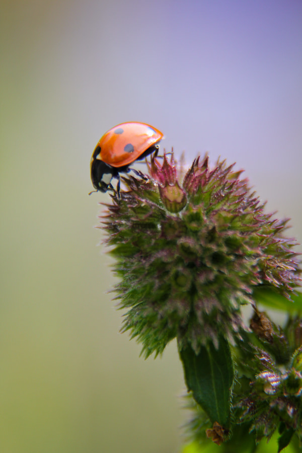 Photograph Buggobar by Kate Johnson on 500px