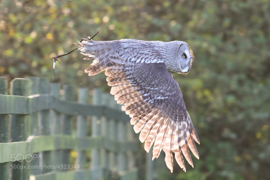 Photograph Owl by Kate Johnson on 500px