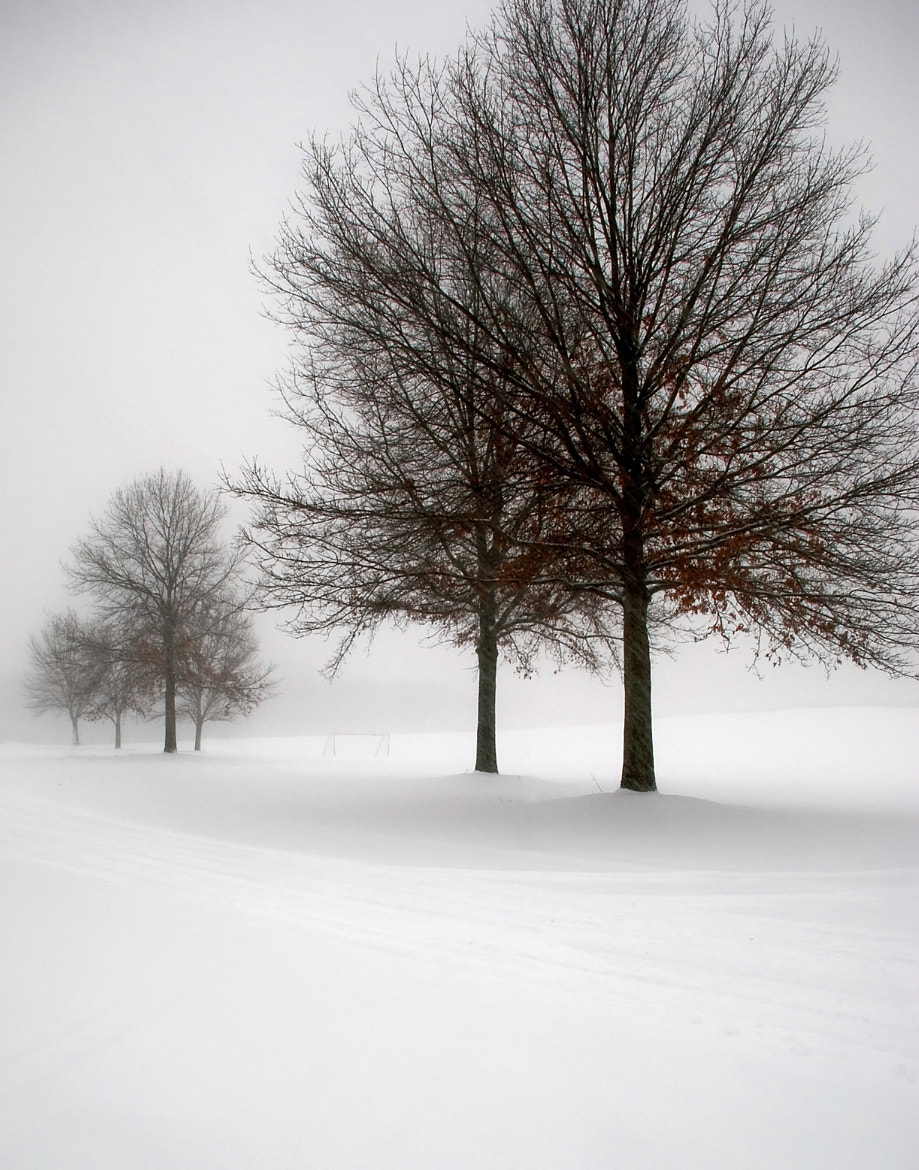 Photograph Feels Like Winter by Curtiss Simpson on 500px