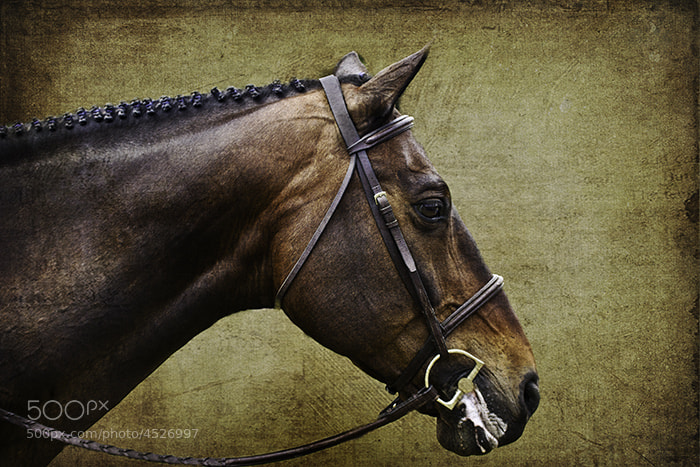 Photograph Equitation class by Jeff Holmes on 500px