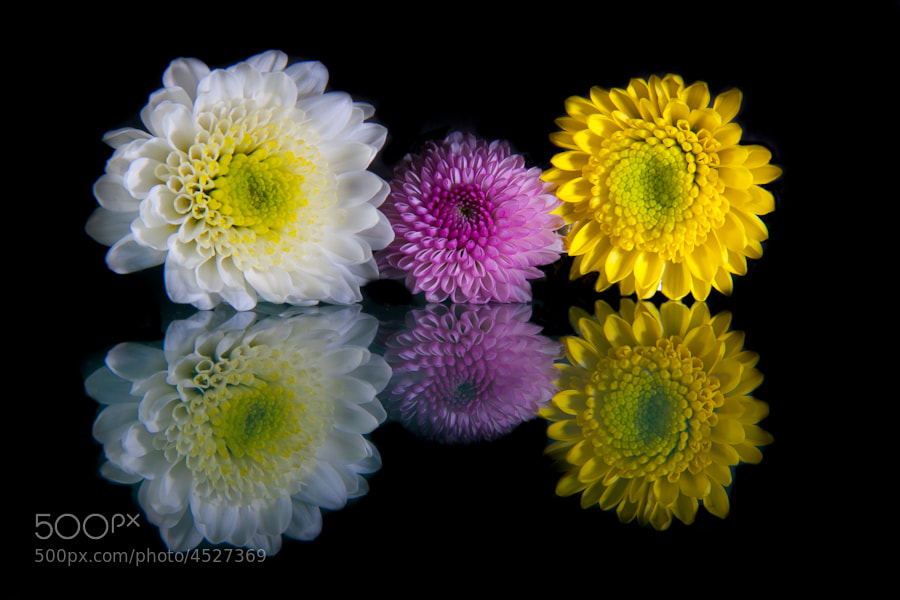3 Flowers by Millan Sanchez (MillanSanchez)) on 500px.com