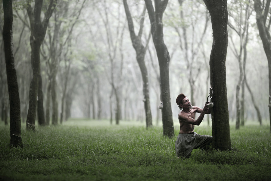 Photograph rubber tappers by firdaus musthafa on 500px