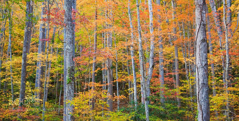 Photograph Fall...Stand by Joseph Balcken on 500px