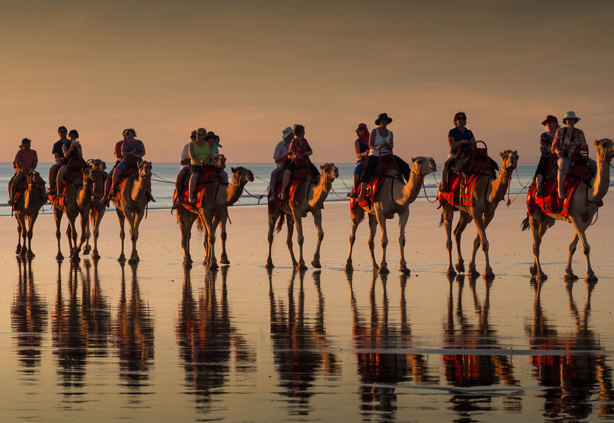 Photograph Camel ride on the beach at sunset by Gary Ayton on 500px