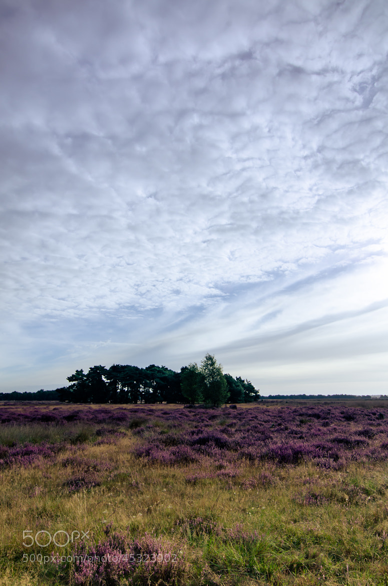 Photograph Strabrechtse Heide 122 by Mr. DESHAMER on 500px