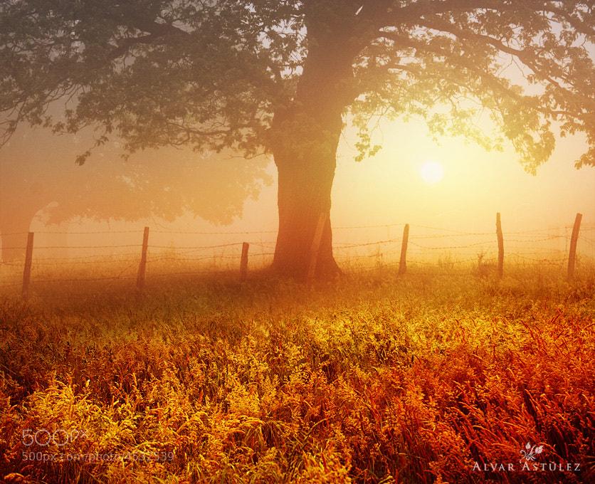 Photograph Good morning** by Alvar Astúlez on 500px