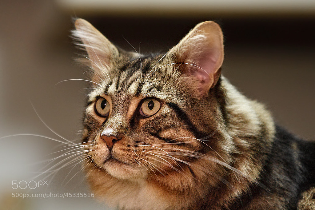 Photograph Aaroon 7d 1600 iso by Paolo Guidetti on 500px