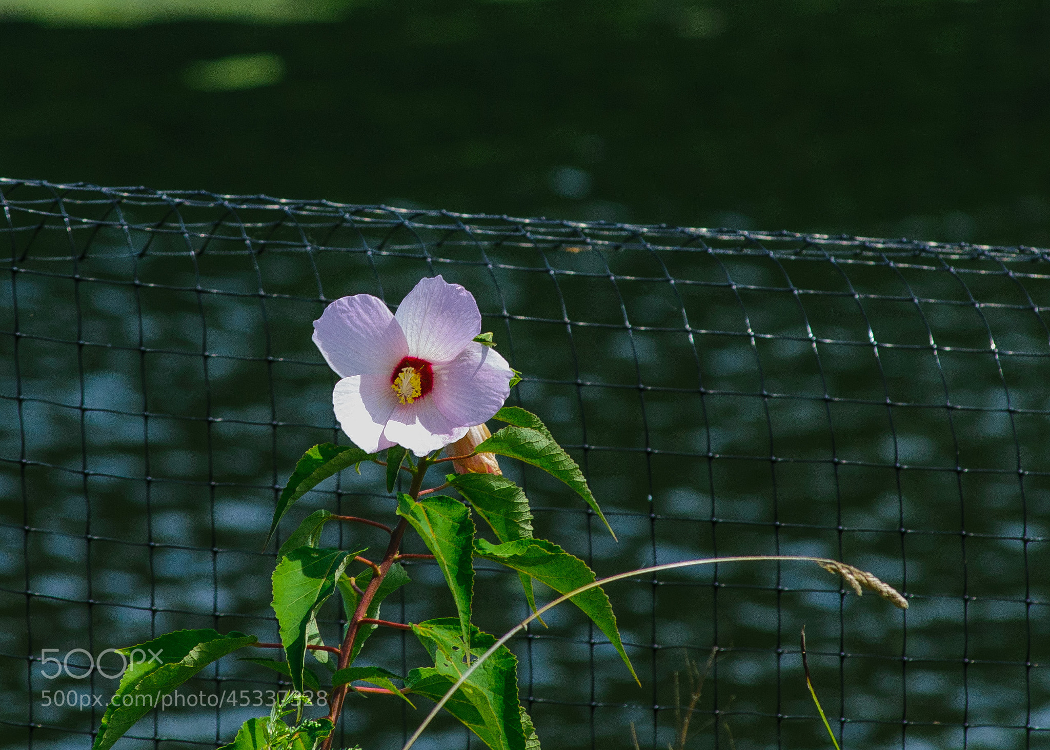 Photograph Can't Fence In Beauty by Christopher Ryan on 500px