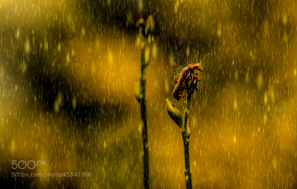 Photograph can I take an umbrella, please by hakan kalyoncu on 500px