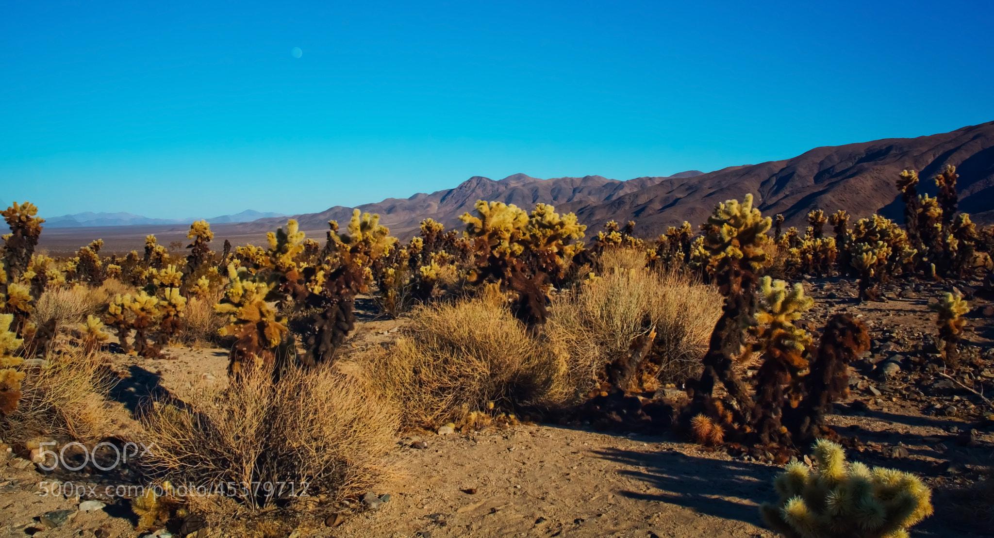 Photograph Joshua Tree Moon by T Dingle on 500px