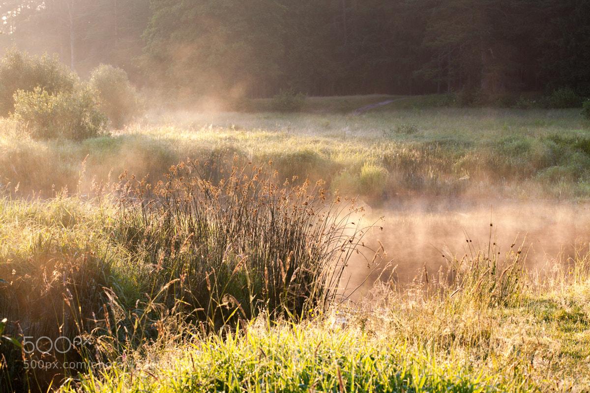Photograph Morning Fresh by Denis Belyaev on 500px